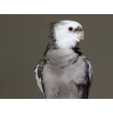 onde encontro veterinário de aves Cidade Tiradentes