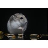 onde encontro veterinário para hamster Bela Vista