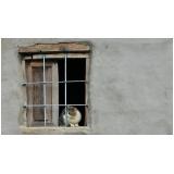 quanto custa atendimento para gatos em casa Cidade Ademar