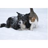 quanto custa atendimento veterinário para cães Anália Franco