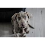 quanto custa consulta veterinária para animais domésticos Liberdade