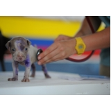 quanto custa tratamento de feridas abertas em cães Belém