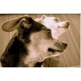 quanto custa tratamento de feridas em animais domésticos Bom Retiro