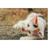 quanto custa tratamento de feridas em cães e gatos Vila Curuçá