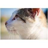 quanto custa tratamento de feridas em pequenos animais Vila Prudente