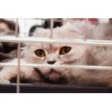 quanto custa tratamento para feridas em gatos Alto da Lapa
