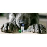 quanto custa vacinação em animais de companhia Luz