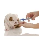 quanto custa vacinas em cachorros filhotes Santo Amaro