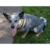 tratamento de feridas abertas em cães preço Centro