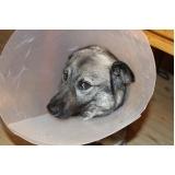tratamento de feridas abertas em cães valor Santa Cecília