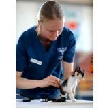 tratamento de feridas abertas em gatos preço Jardim Ângela