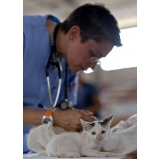 tratamento de feridas abertas em gatos valor Ponte Rasa