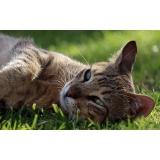 tratamento de feridas abertas em gatos Jardim Marajoara