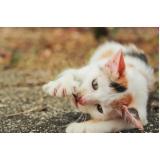 tratamento de feridas cutâneas em cães e gatos valor Bairro do Limão