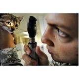 tratamento de feridas em animais domésticos Água Rasa