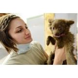 tratamento de feridas em animais valor Santa Cruz