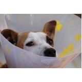 tratamento de feridas em animais Consolação