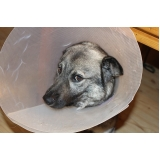 tratamento de feridas em cães e gatos valor Bela Cintra