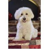 tratamento de feridas em cães e gatos Vila Esperança