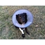tratamento de feridas em pequenos animais Imirim
