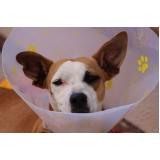 tratamento de feridas para animais a domicílio valor Santa Cecília