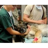 tratamento de feridas abertas em cães