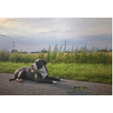 tratamento para feridas em cães