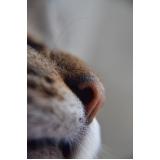 tratamento para feridas em gatos preço Barra Funda