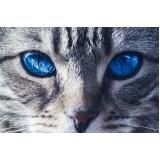 tratamento para feridas em gatos valor Vila Buarque