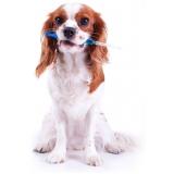 vacina cachorro caroço preço popular Água Branca