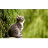 vacina cinomose gatos valor Cidade Patriarca