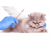 vacina cinomose gatos Glicério