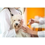 vacina em cachorro