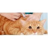 vacina subcutânea em gatos