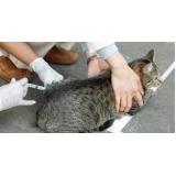 vacina gato alergia preço Jardim Ângela