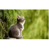 vacina subcutânea em gatos preço Jardim Ângela