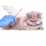 vacina subcutânea em gatos Vila Curuçá