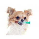 vacinação a domicílio para animais valor Cachoeirinha