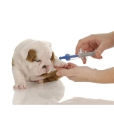 vacinação clinica veterinária valor Campo Limpo