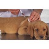 vacinação em animais de companhia valor Vila Gustavo