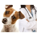 vacinação em animais de estimação valor Vila Romana
