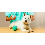 vacinação em animais Bela Vista