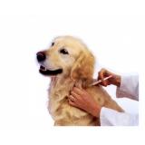 vacinação em cachorros preço popular Jardim São Paulo