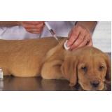 vacinação em cachorros valor Santa Efigênia
