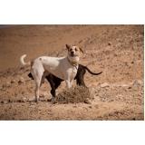 vacinação em cachorros Parque São Lucas