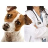 vacinação para animais em casa