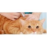 vacinação para gatos em casa