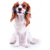 vacinas em cachorros preço popular Mooca