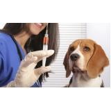 vacinas em cachorros valor Pedreira