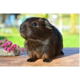 veterinário para hamster